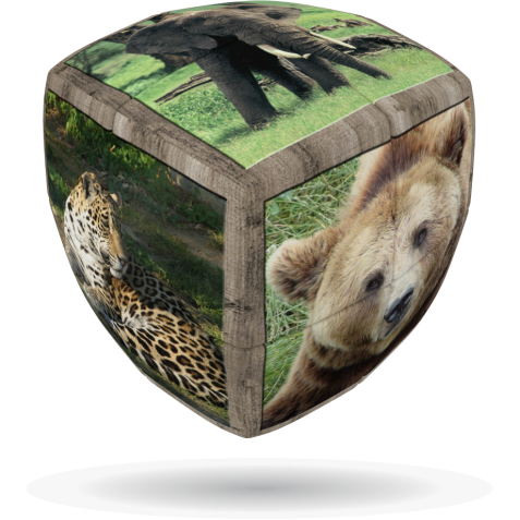 Wild Animals - V-CUBE 2 Pillow